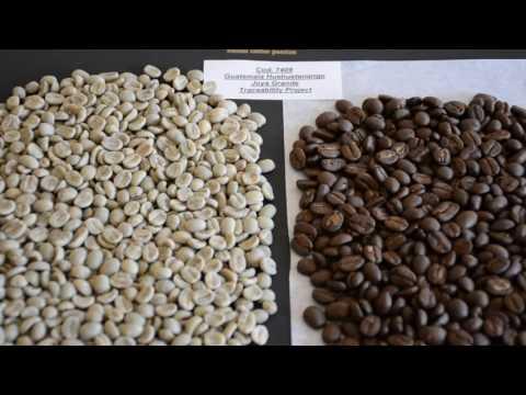 Guatemala Huehuetenango Joya Grande - Caffè del progetto Sandalj Traceability