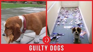 Cute Guilty Dogs Caught In The Act | Funny Pet Compilation