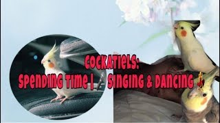 COCKATIEL: SING & DANCE | PLAYTIME | IF YOU HAPPY AND YOU KNOW