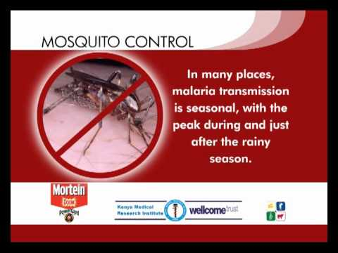 Tip 2: Malaria transmission -- when is it at its highest and what can you do to prevent it?