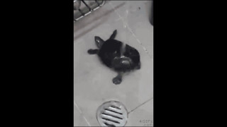Turtle Dancing in the Shower (Shooting Stars Meme)