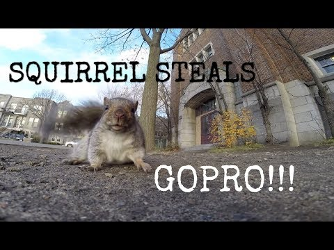 Верверичка краде GoPro камера за да го снима својот живот на дрвјата