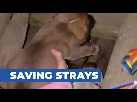 Saving Strays