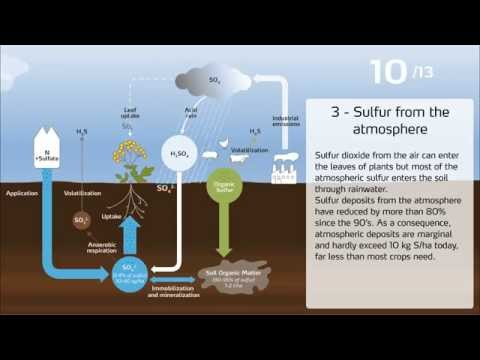 The sulfur cycle in agriculture