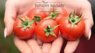 Tohum Sanatı