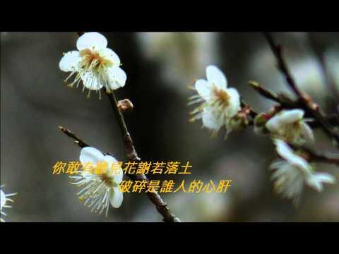 江蕙-無言花  ,烏松崙梅花,720P HD