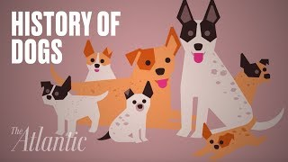 The Origin of Dogs