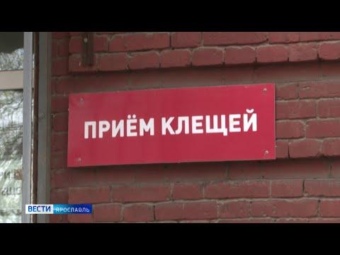 В Ярославской области проснулись клещи