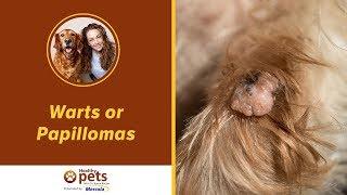 warts and papillomas treatment)