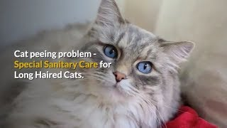 Cat peeing problem - Special sanitary care for long haired cats