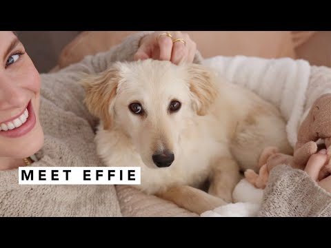 Meet Effie | Estée Lalonde