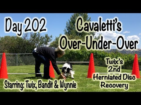 Day 202: Cavaletti's - Over, Under, Over