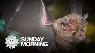 Bats and the search for COVID's origin