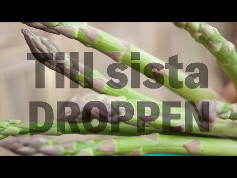 Till den sista droppen – odlingen av sparris tömmer Ica-dalen på vatten