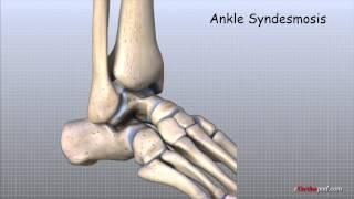 Ankle Anatomy Animated Tutorial
