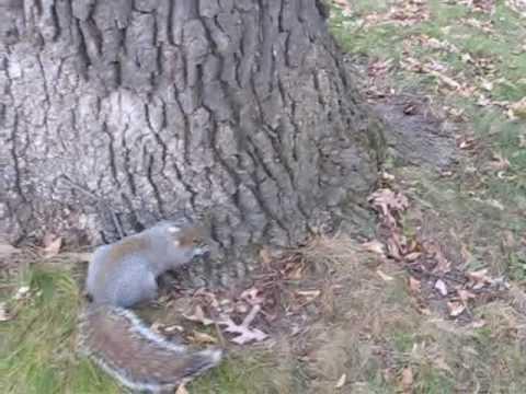 Пијана верверичка