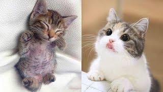 Who's Cuter Than Me? 😻 | Cute Cat Video 2019 | Kitten Video 2019