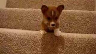 Butterball Downstairs