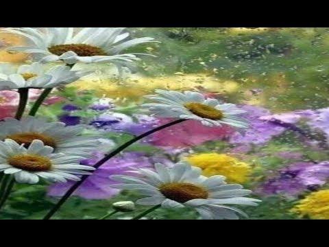 Duchovní význam rostlin (L'importance spirituelle des plantes)