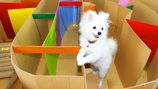 Funny Race Between Snowball Dog And Mochi Hamster Running In Hot Air Balloon Maze