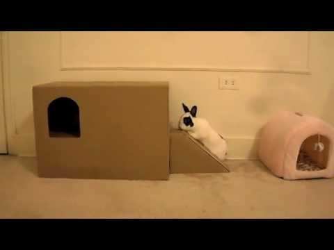 New home-made playhouse for little rabbit - YouTube