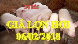 Dự báo giá lợn hơi 6/2/2018   Giá lợn hơi 6/2/2018   Tin Tức 24h