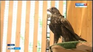 Сегодня в Исилькульском городском суде проходит заседание по делу о контрабанде краснокнижных птиц