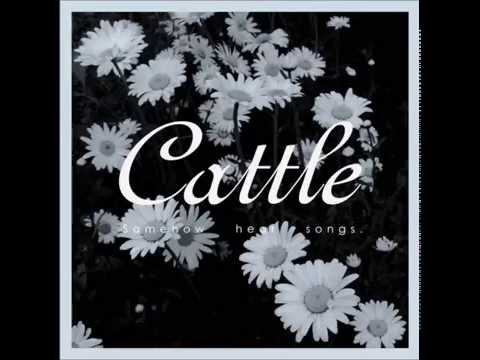 Cattle -