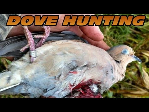 Dove Hunting 2014