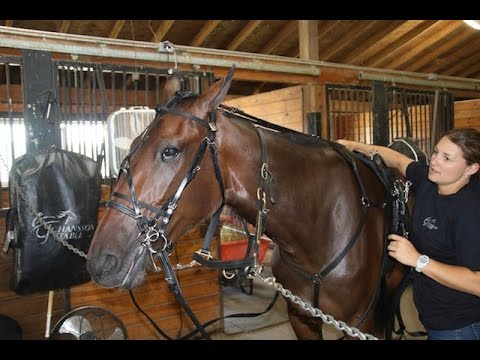 Tack to Track presented by Jacks - How to put on a bridle