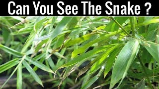 Nobody Can Find All The Hidden Animals | Optical Illusions | Brain Teasers |
