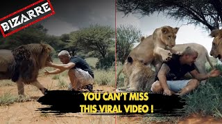 Viral Video: Lion hugs man, breaking off a glacier, lootin..