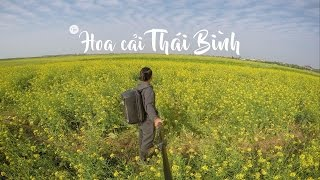 Cánh Đồng Hoa Cải Vũ Thư Thái Bình Flycam - Nếm TV