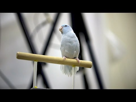 Stanford researchers create new method for recording bird flight in 3D