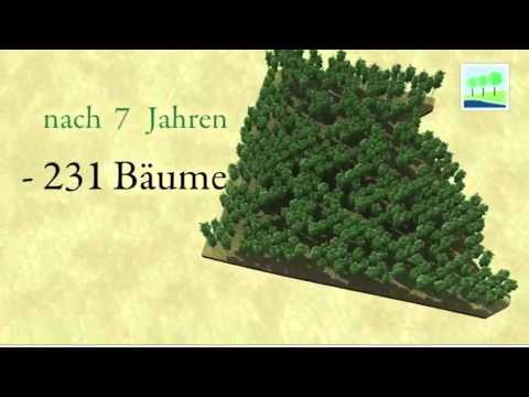 Life Forestry.  Ausforstung einer Teakholzplantage