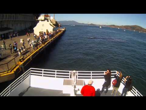 Exclusive Raw Footage: First Great White Shark hunt recorded in San Francisco Bay! (OFFICIAL)
