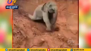 Baby elephant sliding down a slope, video goes viral..