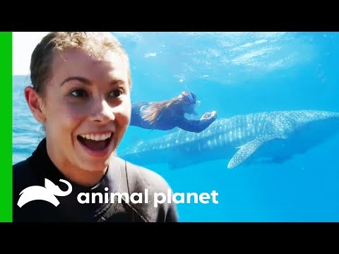 Bindi Swims With A Whale Shark And Names Him After Her Dad! | Crikey! It's The Irwins