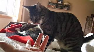 Tickling the Kitty Cats | Playful Cats In the Morning