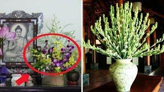 Chớ dại mà đặt lên bàn thờ 6 loài hoa này nếu không muốn THẤT LỄ Thần Phật, nhà cửa xào xáo...