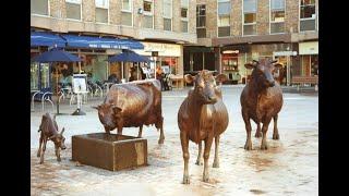 La Vaque dé Jèrri - linda escultura que traduz o amor e o orgulho pela raça Jersey!