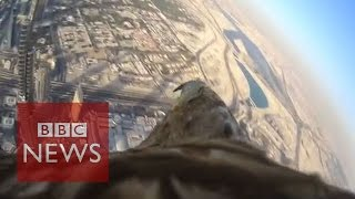 Eagle sets a world record for flying from Dubai's tallest ..