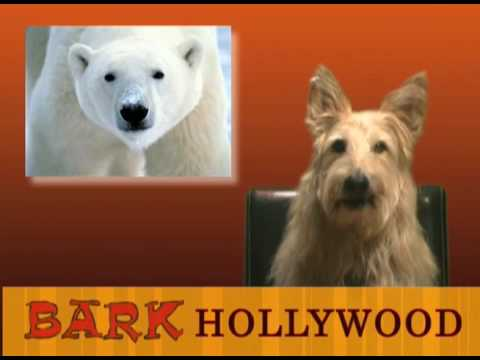 Bark Hollywood   Episode 4