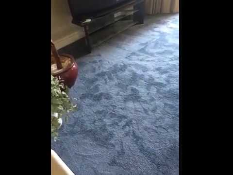Express Flooring Tucson, AZ Reviews