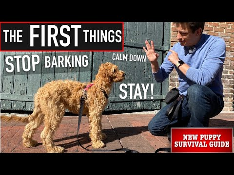 NEW PUPPY SURVIVAL GUIDE: How to Train ANY Dog to STOP Barking, Calm Down & Stay! (EP: 7)
