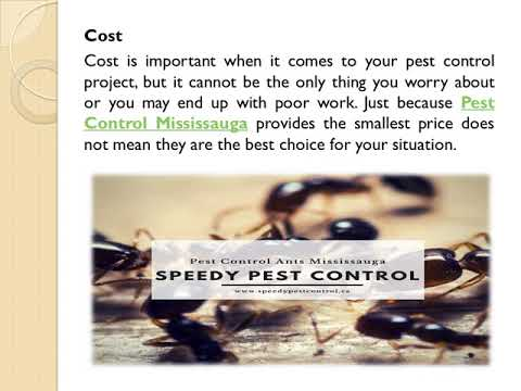 Tips For Hiring Professionals Pest Control Service