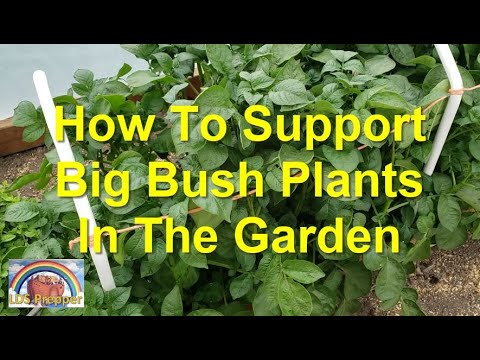 How To Support Big Bush Plants In The Garden