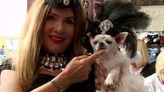"""America's Top Dog Model (R) How to Get to the Top """"Black & White Party - Episode 5 - Season Finale"""
