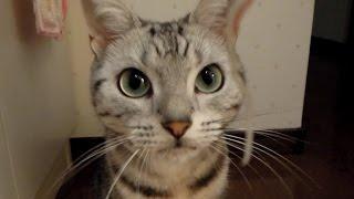 怒り心頭で拗ねる猫~家族旅行でおいて行かれた場合 -Angry Cat said why do you leave me alone?