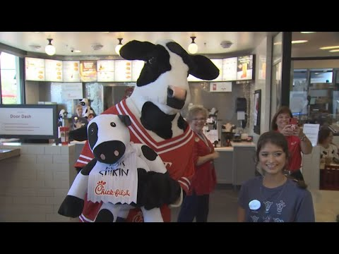 Phoenix-area Chick-Fil-A locations celebrating Cow Appreciation Day